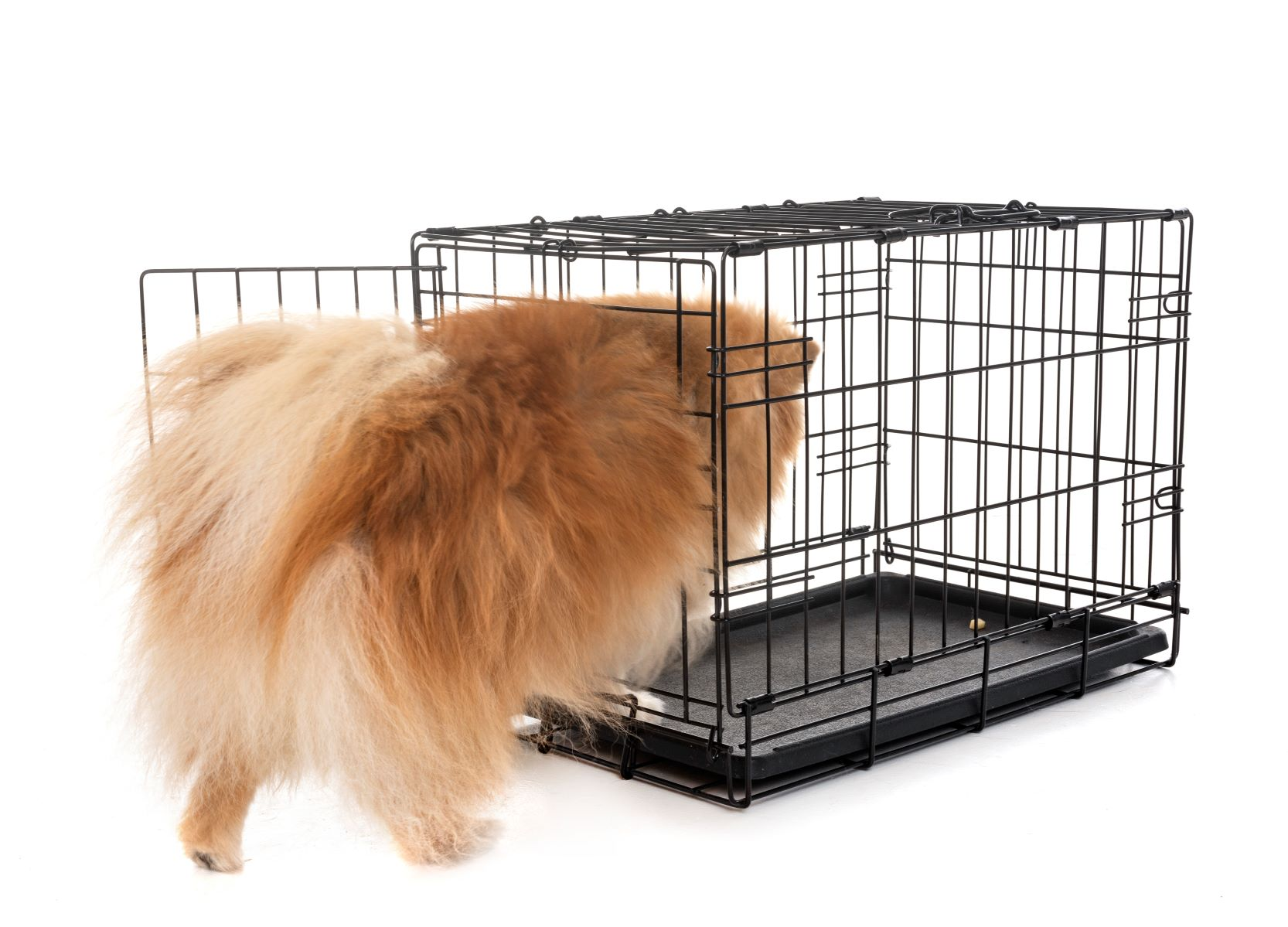 How To Move Your Pets With You When Immigrating To New Zealand Rand Rescue